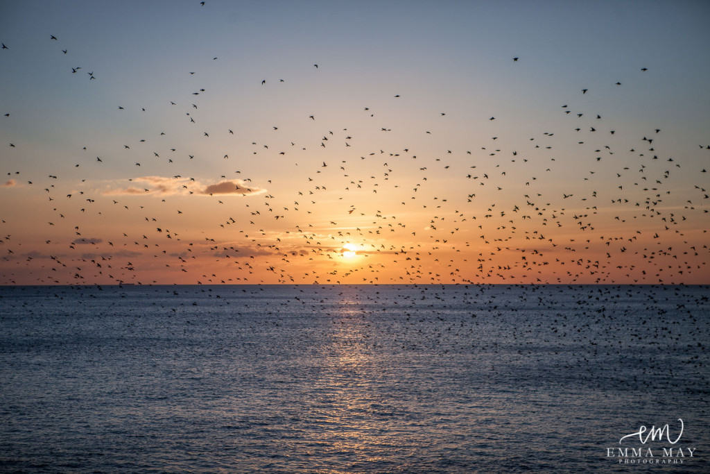 Brighton Wedding Photography - Starlings Brighton Pier Sunset